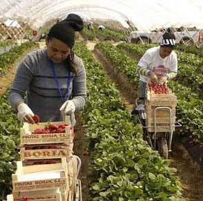 Resultado de imagen de abusos contra las recolectoras de la fresa en Huelva