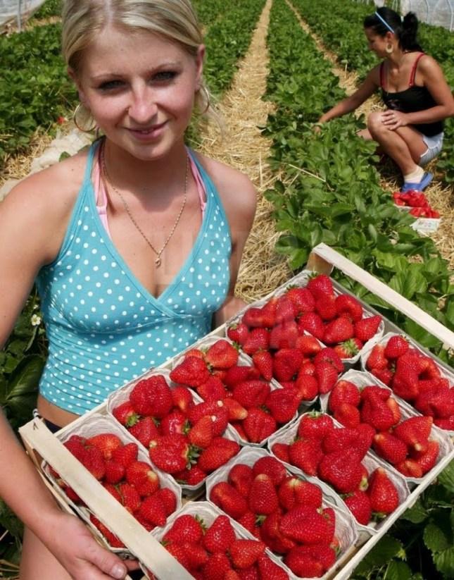 Resultado de imagen de recolectoras marroquíes de la fresa en Huelva
